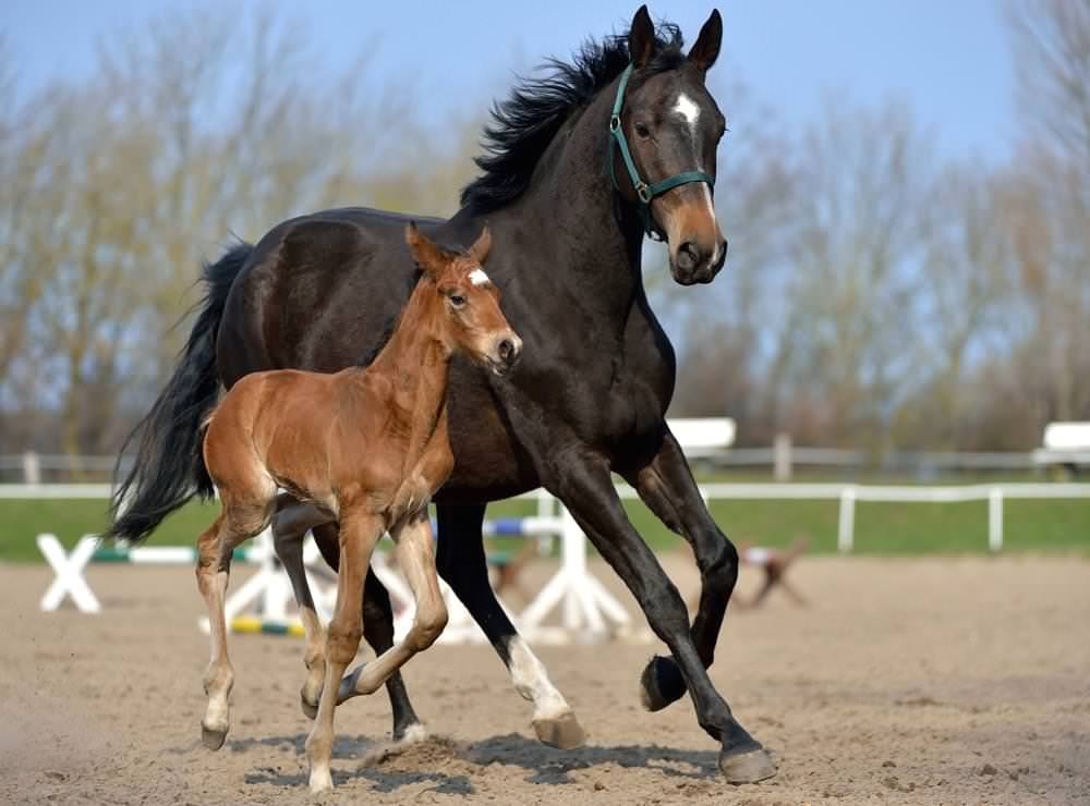 Pferde kaufen auf Rügen vom Reiterhof Schwarbe in Altenkirchen